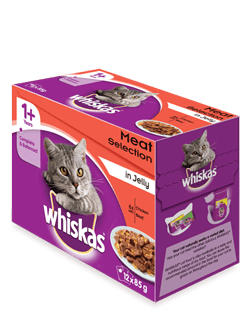 Giving Cat Wet Food Transition