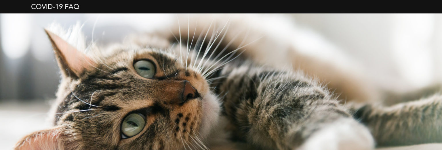 Whiskas® Covid-19 cat picture
