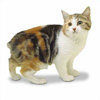 Whiskas® Manx Cat Picture