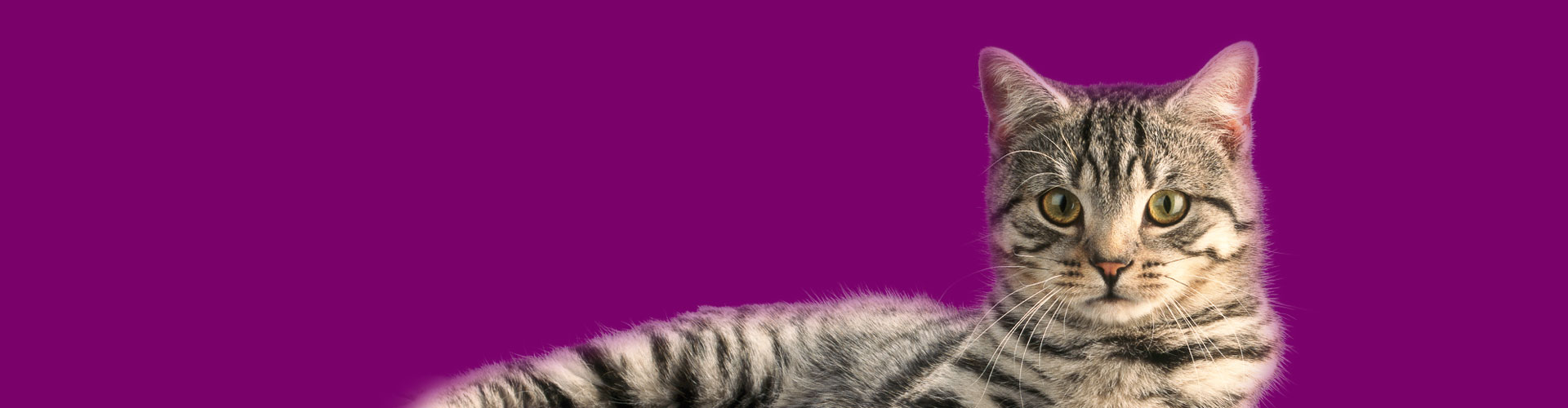 Whiskas® right headline cat picture
