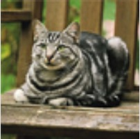Whiskas® Domestic Cat Picture