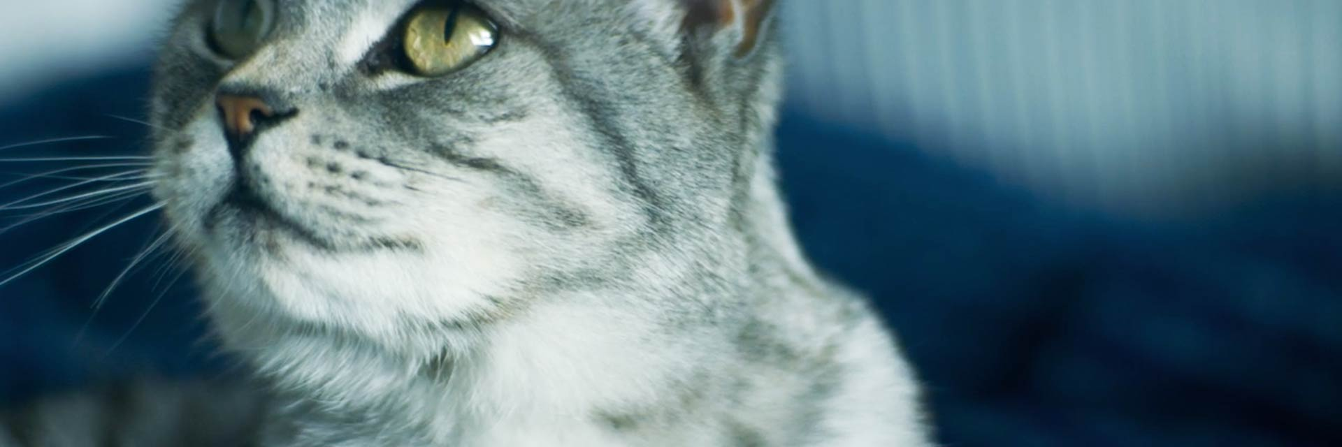 whiskas-video-banner